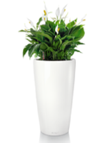 office plants peace lily