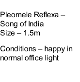 Pleomele Reflexa – Song of India Size – 1.5m  Conditions – happy in normal office light