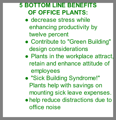 office plants benefits